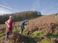 CTS Volunteer Workday on Twmbarlwm - 30th november 2014